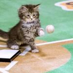 Kittens Take Over Baseball in Hallmark's Paw Star Game