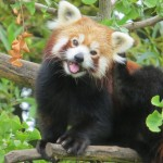 Where to Find The Most Adorable Animals