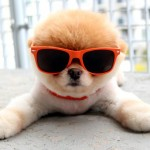The Cutest Animals on the Internet