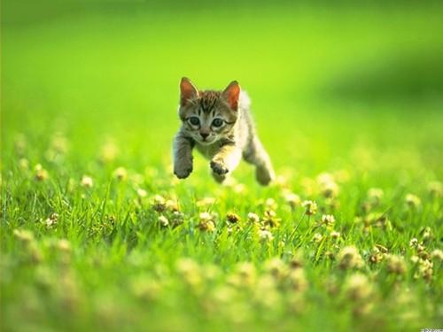 Kitty Running